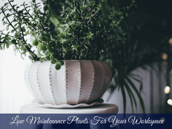 Low Maintenance Workspace Plants