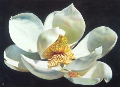 Magnolia Majesty_Oil_79x110cm