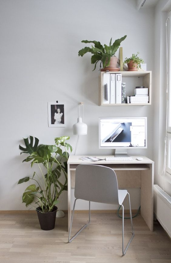 plants for your workspace